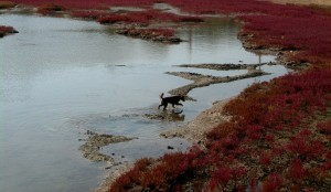rotes meer 014